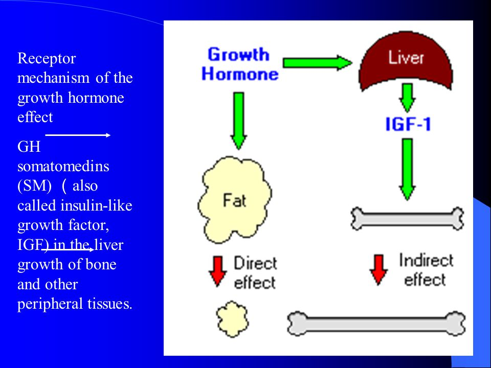 Receptor mechanism of the growth hormone effect