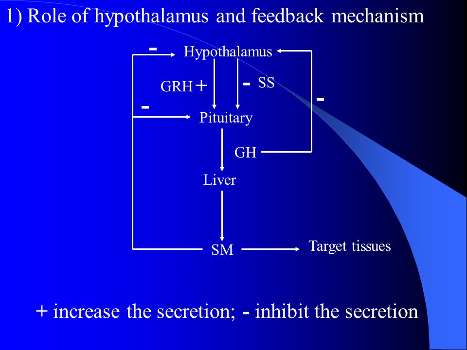 - - - - 1) Role of hypothalamus and feedback mechanism +