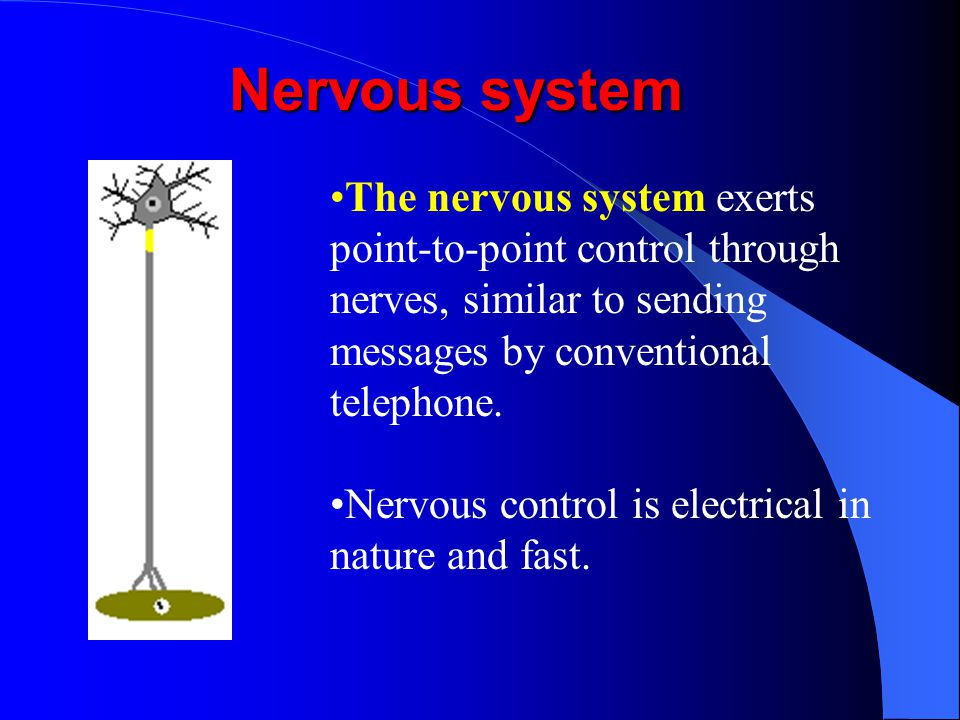 Nervous system The nervous system exerts point-to-point control through nerves, similar to sending messages by conventional telephone.