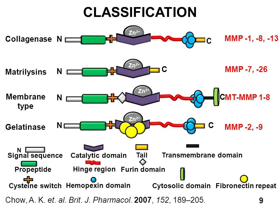 CLASSIFICATION MMP -1, -8, -13 C N Collagenase MMP -7, -26 Matrilysins
