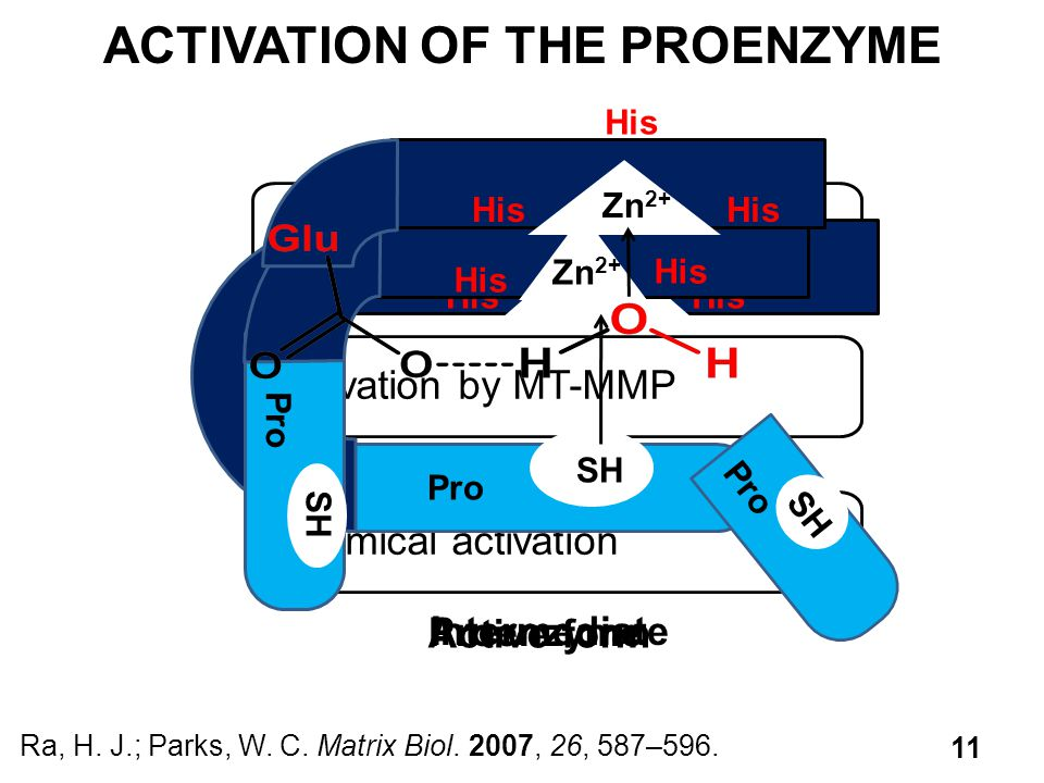 ACTIVATION OF THE PROENZYME