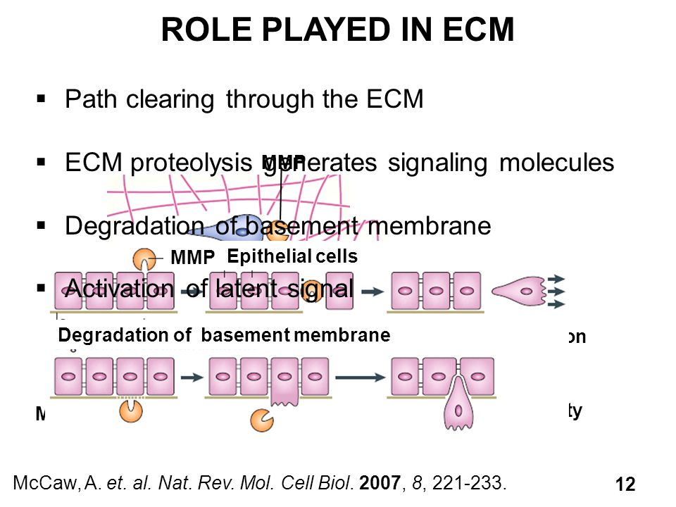 ROLE PLAYED IN ECM Path clearing through the ECM