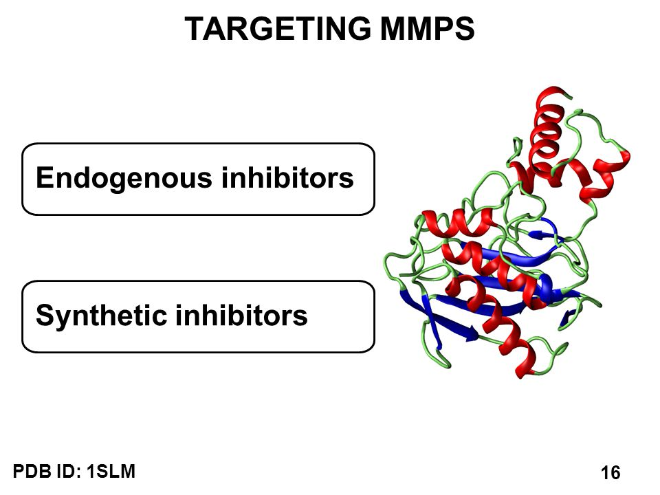 TARGETING MMPS Endogenous inhibitors Synthetic inhibitors PDB ID: 1SLM