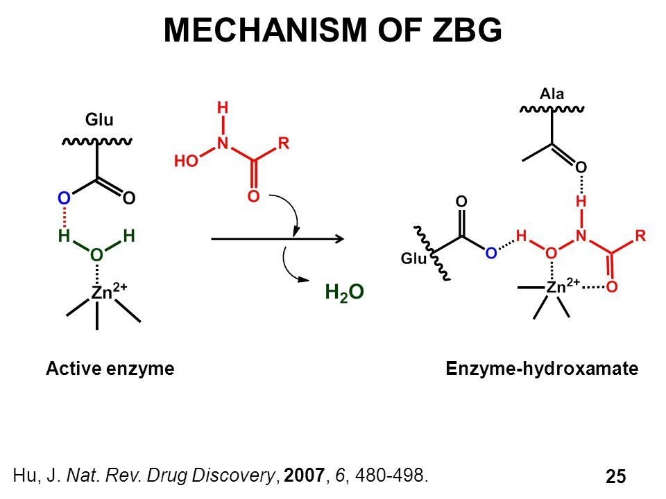 MECHANISM OF ZBG Active enzyme Enzyme-hydroxamate