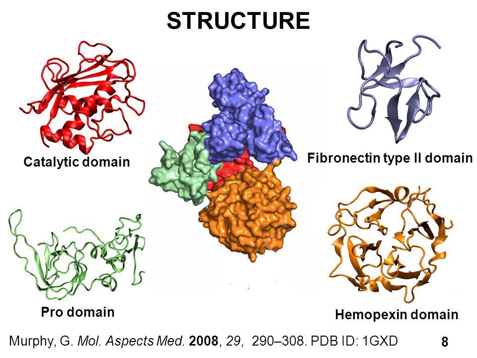 STRUCTURE Fibronectin type II domain Catalytic domain Pro domain