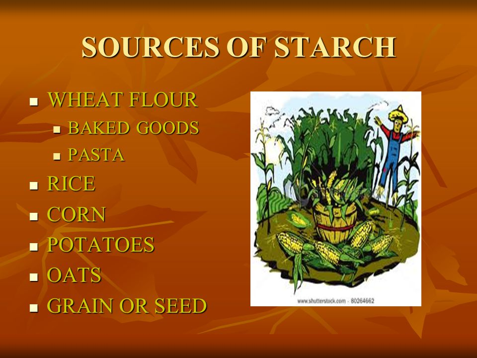 SOURCES OF STARCH WHEAT FLOUR RICE CORN POTATOES OATS GRAIN OR SEED