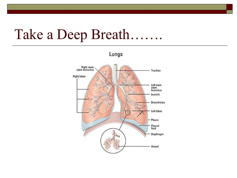 Take a Deep Breath…….