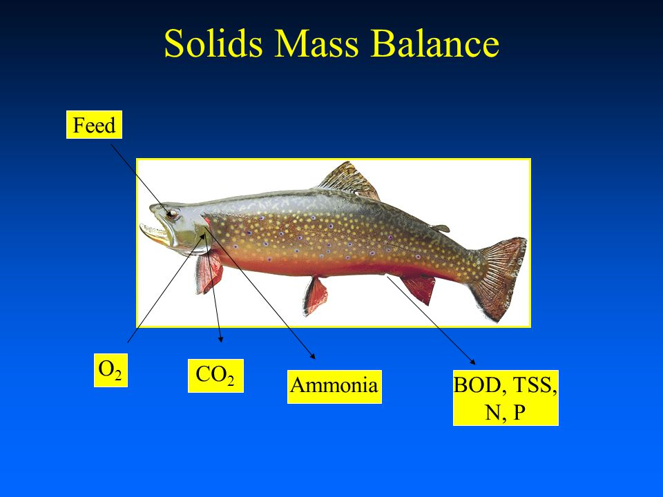 Solids Mass Balance Feed O2 CO2 Ammonia BOD, TSS, N, P