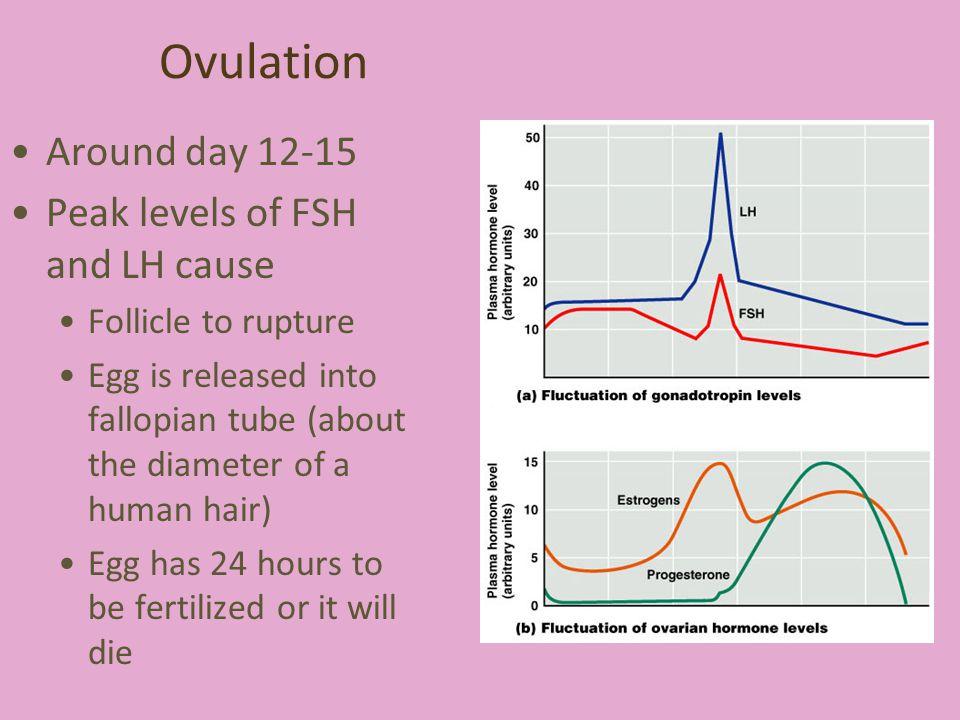 Ovulation Around day 12-15 Peak levels of FSH and LH cause