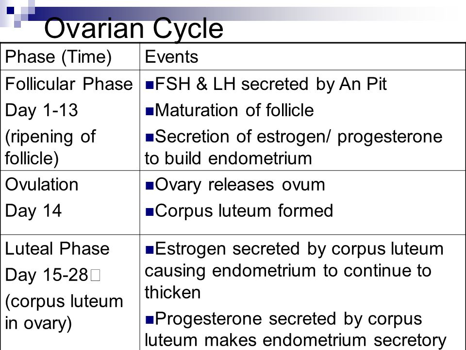 Ovarian Cycle Phase (Time) Events Follicular Phase Day 1-13