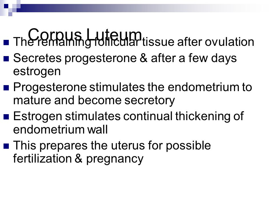 Corpus Luteum The remaining follicular tissue after ovulation