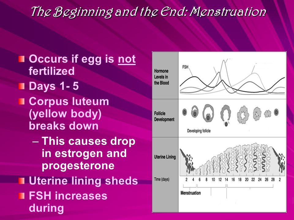 The Beginning and the End: Menstruation