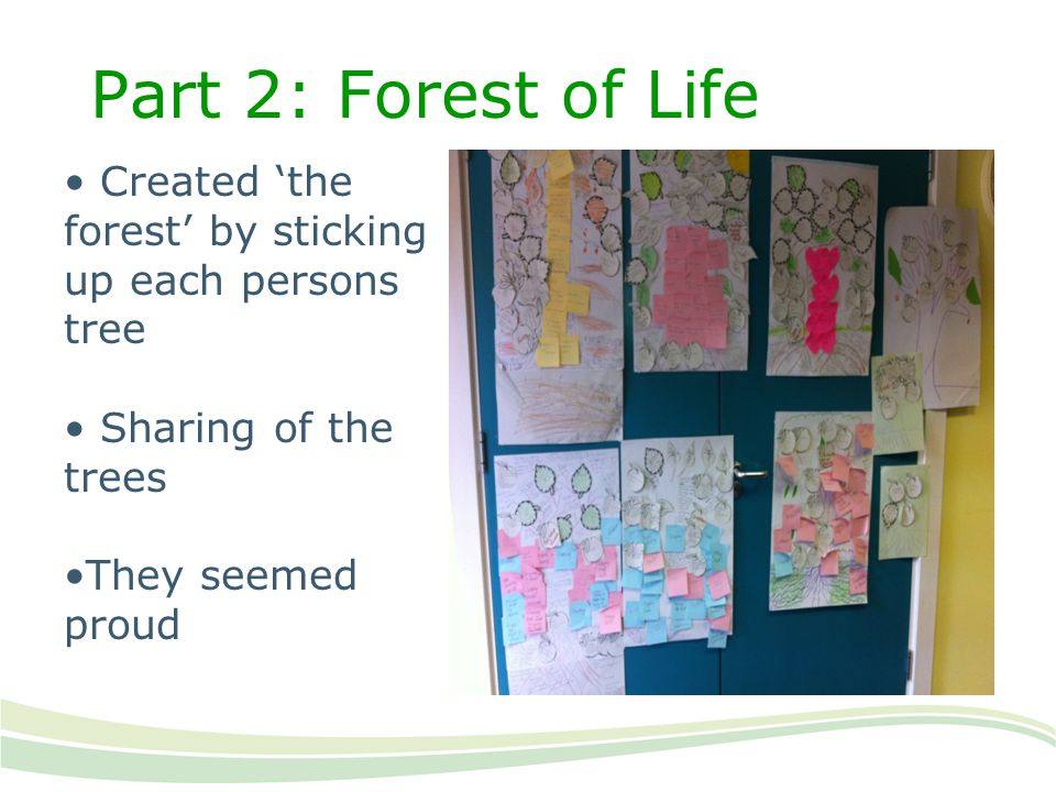 Part 2: Forest of Life Created 'the forest' by sticking up each persons tree. Sharing of the trees.