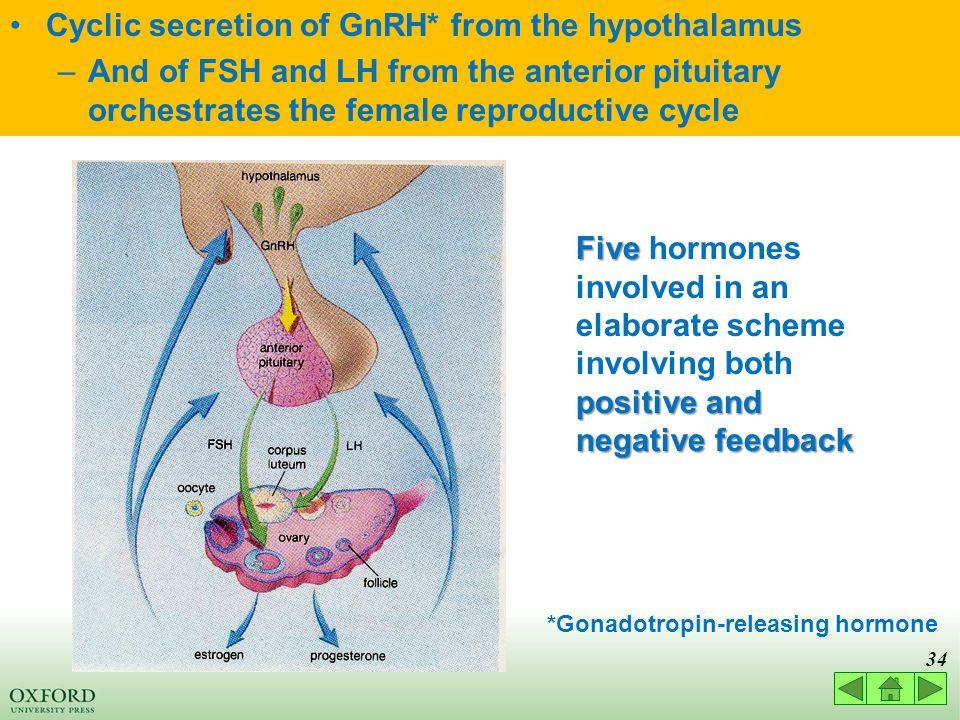 *Gonadotropin-releasing hormone