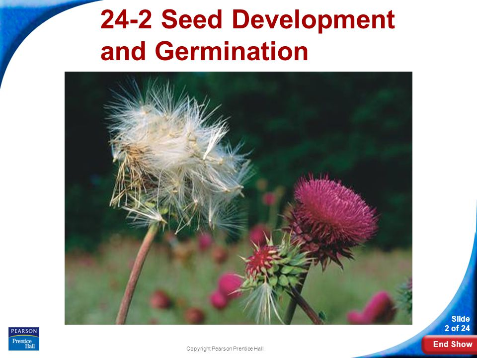 24-2 Seed Development and Germination