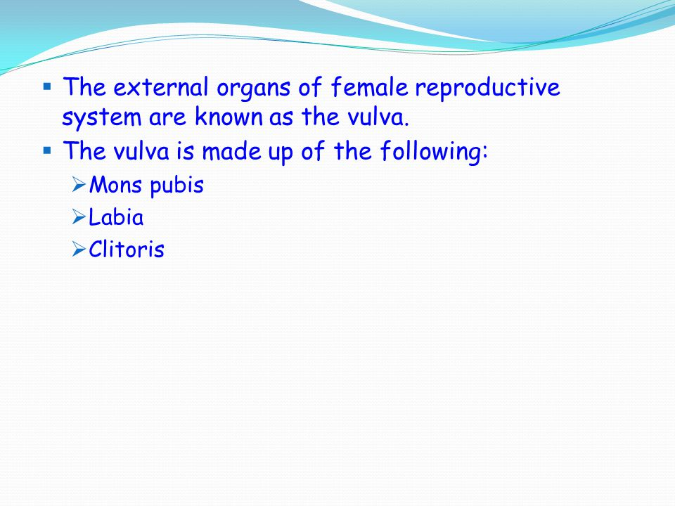 The vulva is made up of the following: