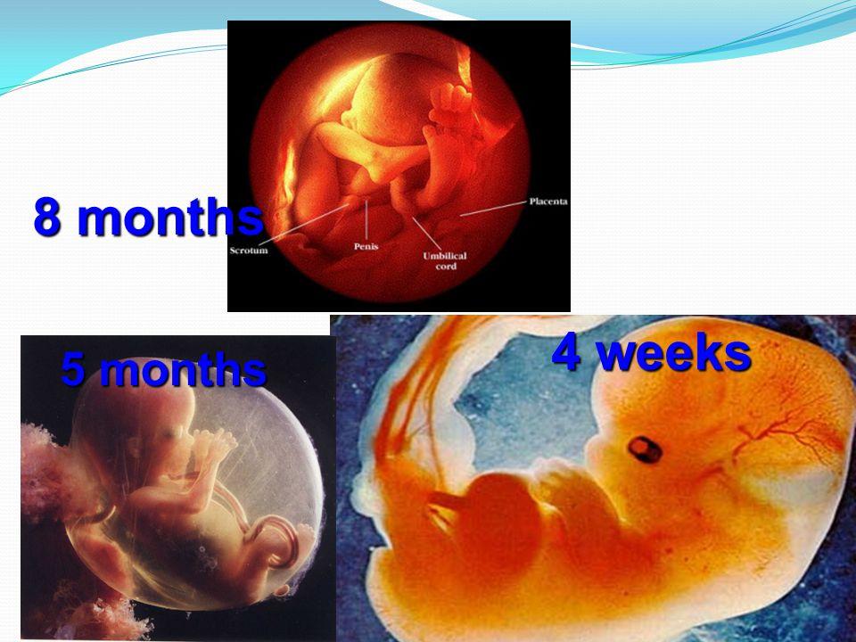 8 months 4 weeks 5 months