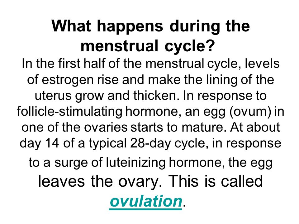 What happens during the menstrual cycle