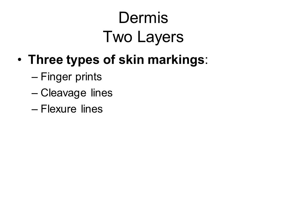 Dermis Two Layers Three types of skin markings: Finger prints