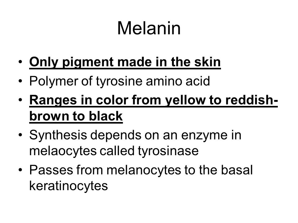 Melanin Only pigment made in the skin Polymer of tyrosine amino acid