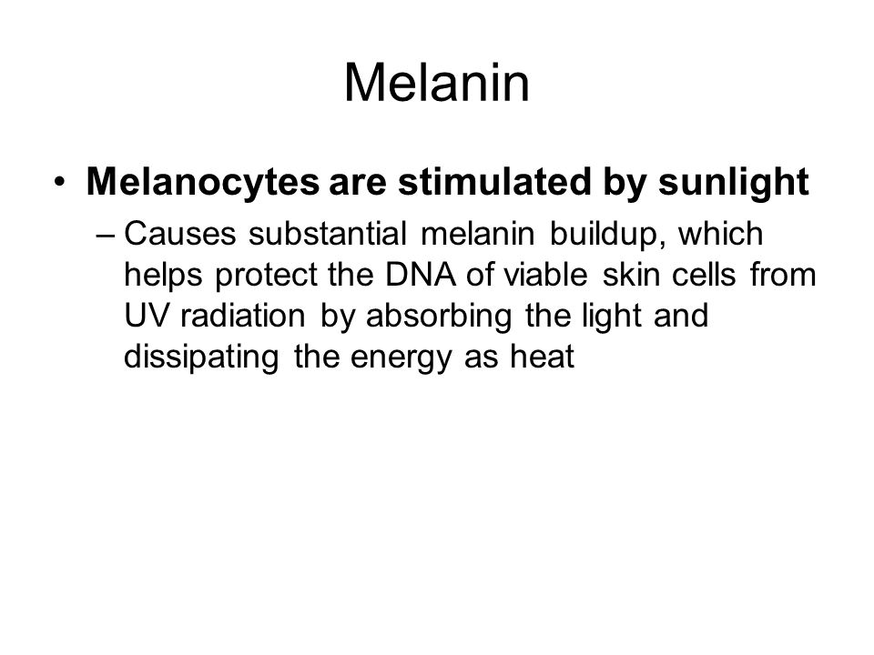 Melanin Melanocytes are stimulated by sunlight