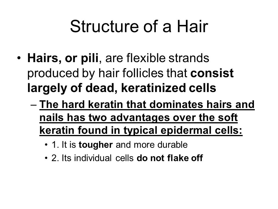 Structure of a Hair Hairs, or pili, are flexible strands produced by hair follicles that consist largely of dead, keratinized cells.
