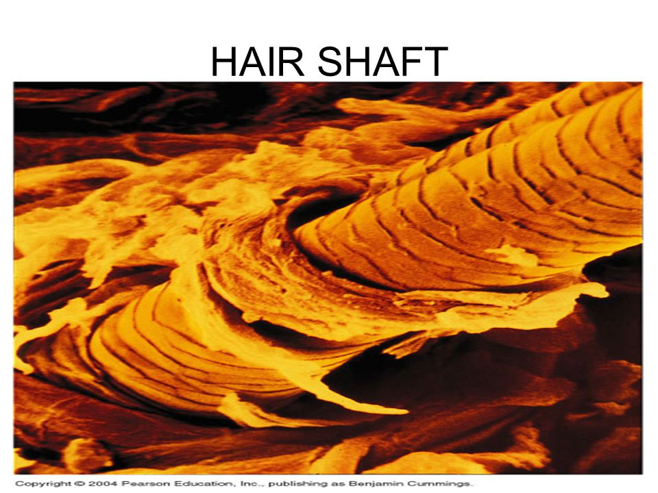 HAIR SHAFT