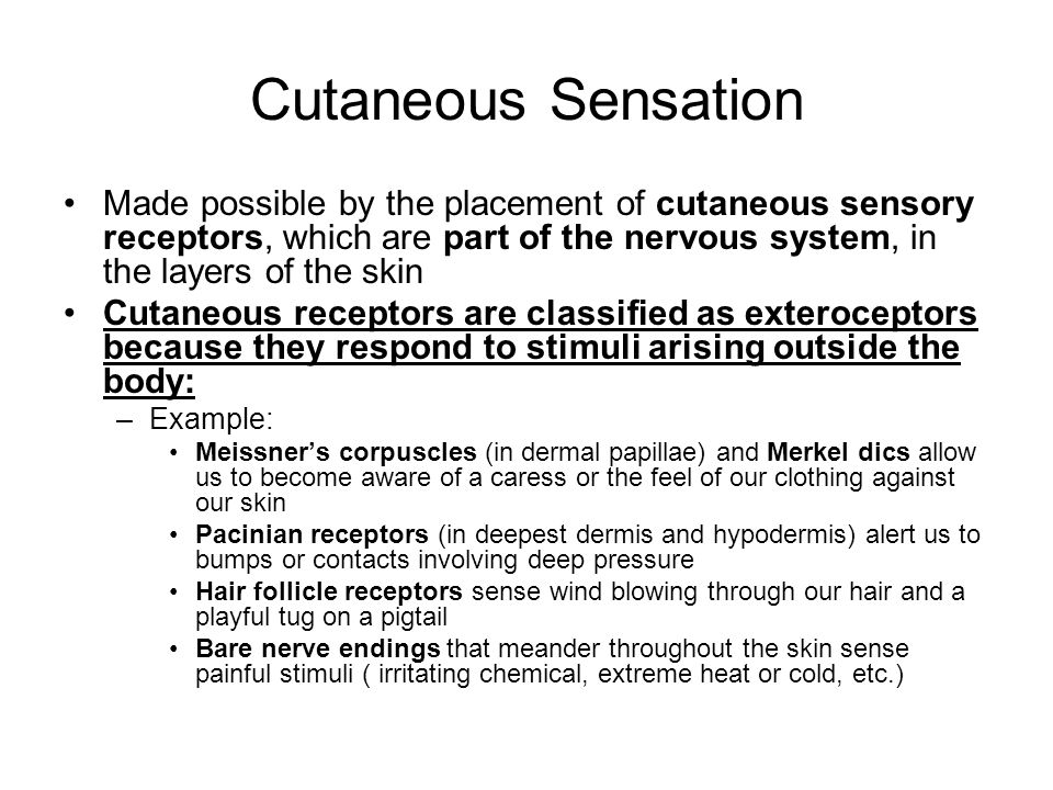 Cutaneous Sensation Made possible by the placement of cutaneous sensory receptors, which are part of the nervous system, in the layers of the skin.