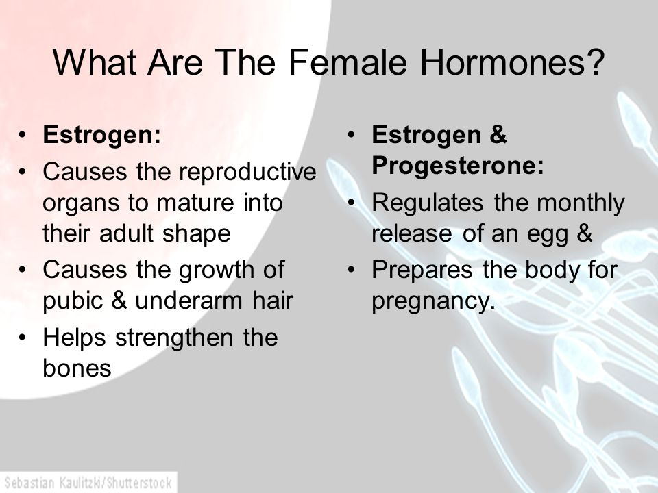 What Are The Female Hormones