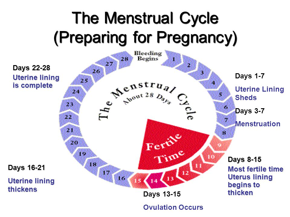 The Menstrual Cycle (Preparing for Pregnancy)