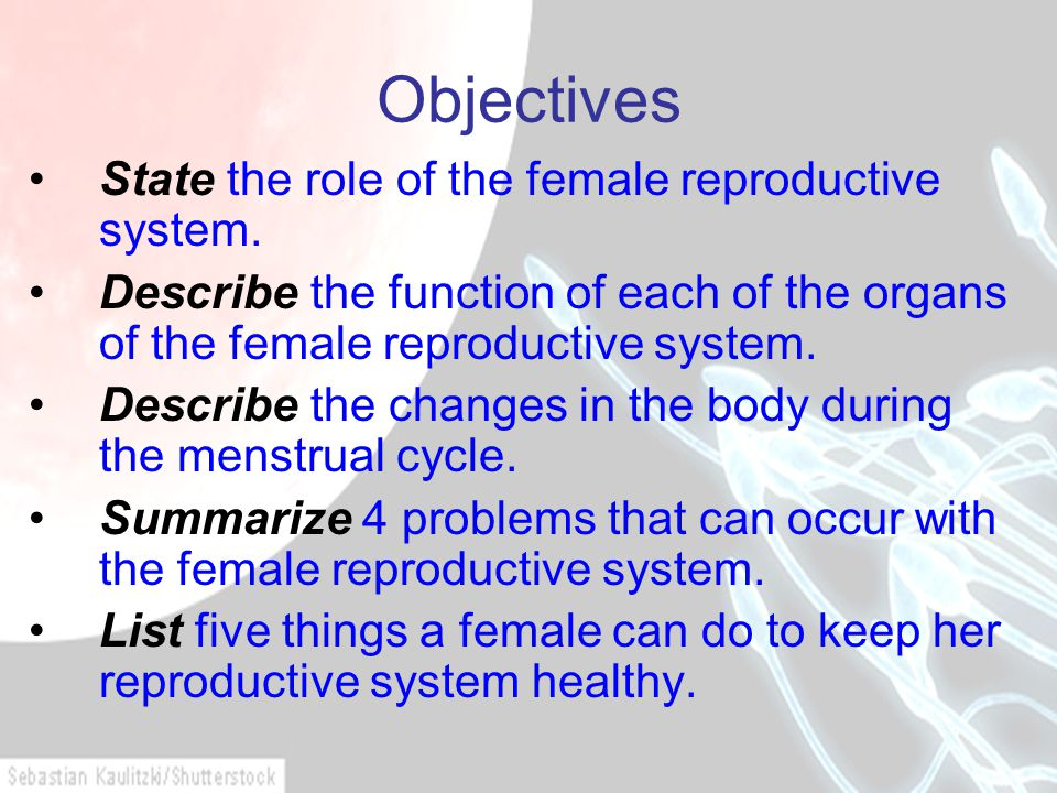 Objectives State the role of the female reproductive system.