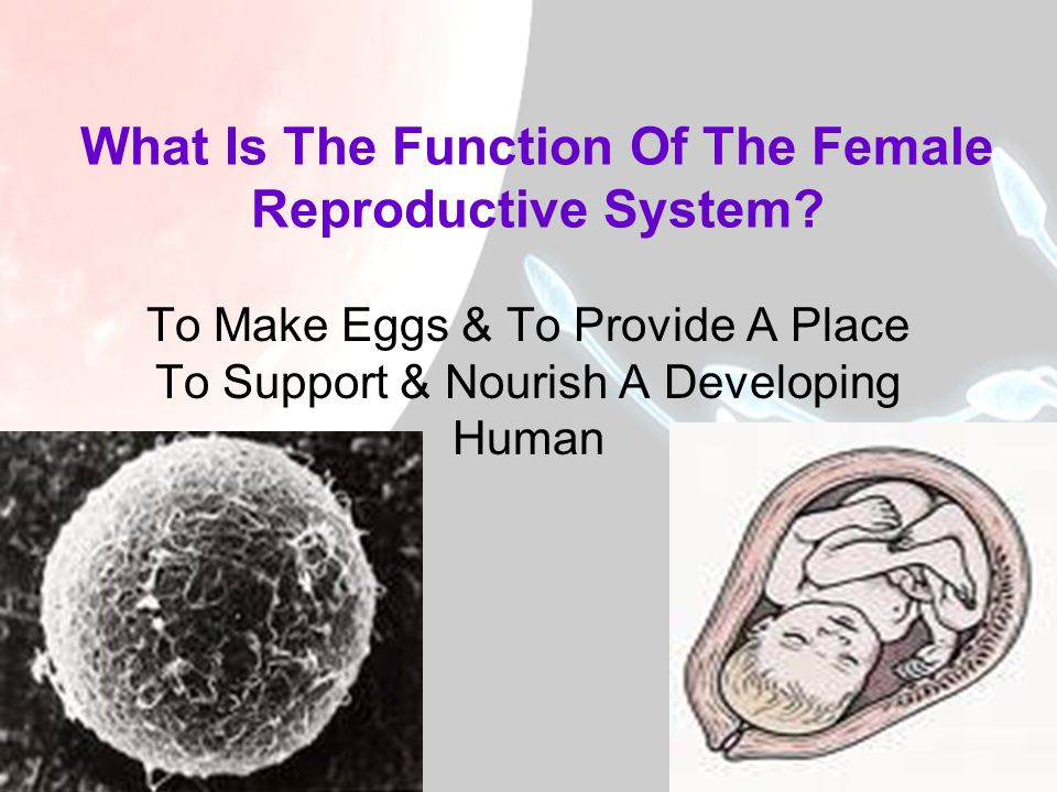 What Is The Function Of The Female Reproductive System