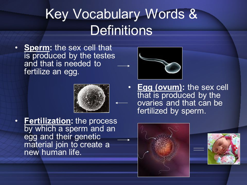Key Vocabulary Words & Definitions