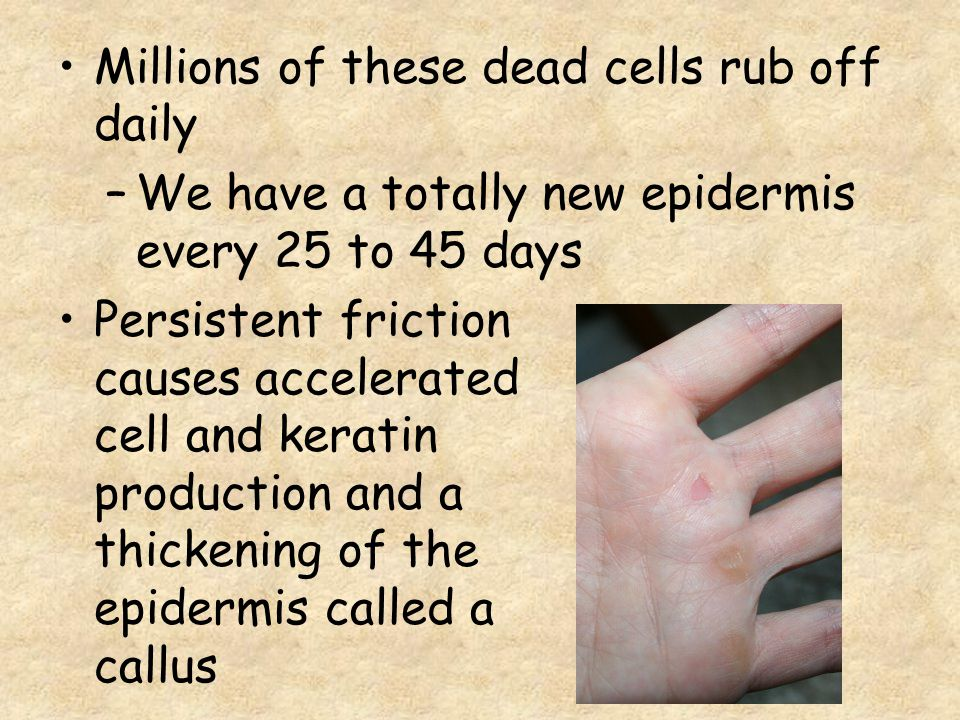 Millions of these dead cells rub off daily