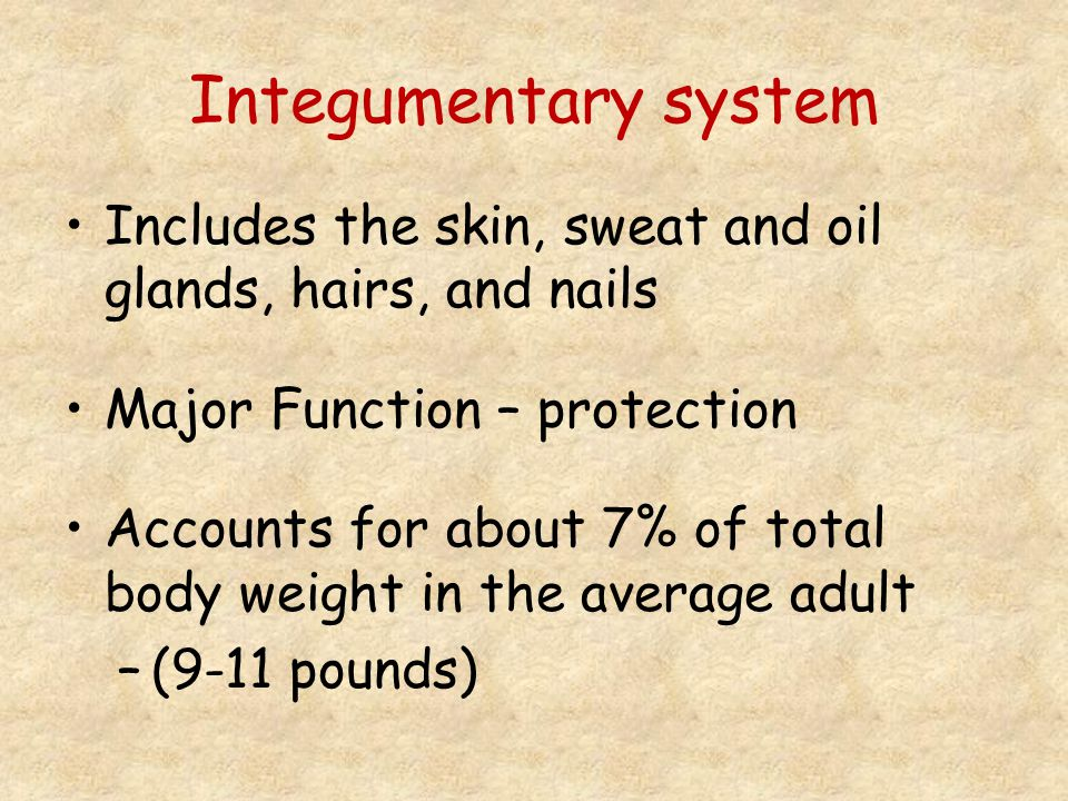 Integumentary system Includes the skin, sweat and oil glands, hairs, and nails. Major Function – protection.