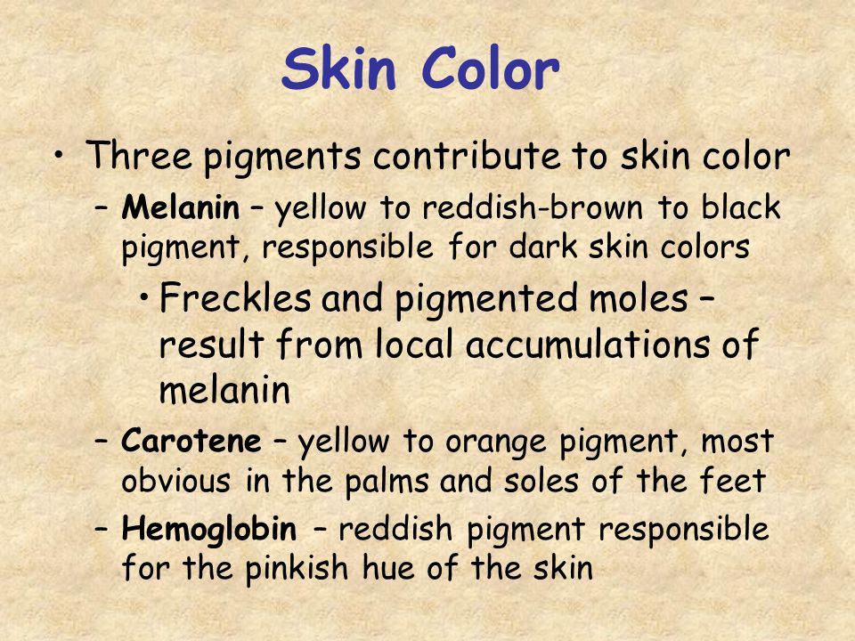 Skin Color Three pigments contribute to skin color