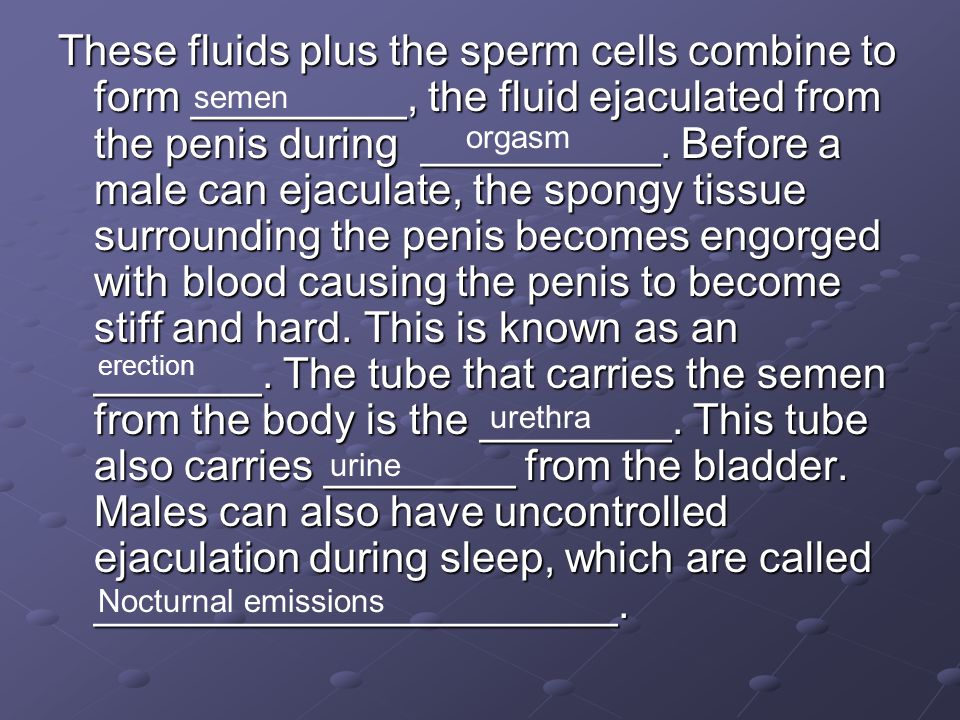 These fluids plus the sperm cells combine to form _________, the fluid ejaculated from the penis during __________. Before a male can ejaculate, the spongy tissue surrounding the penis becomes engorged with blood causing the penis to become stiff and hard. This is known as an _______. The tube that carries the semen from the body is the ________. This tube also carries ________ from the bladder. Males can also have uncontrolled ejaculation during sleep, which are called ______________________.