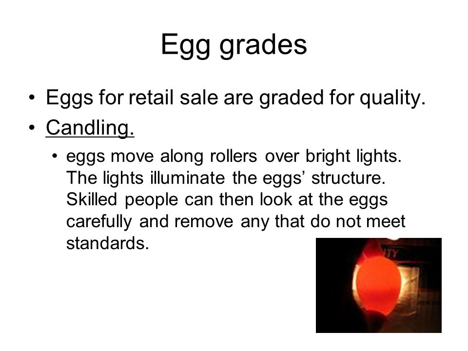 Egg grades Eggs for retail sale are graded for quality. Candling.