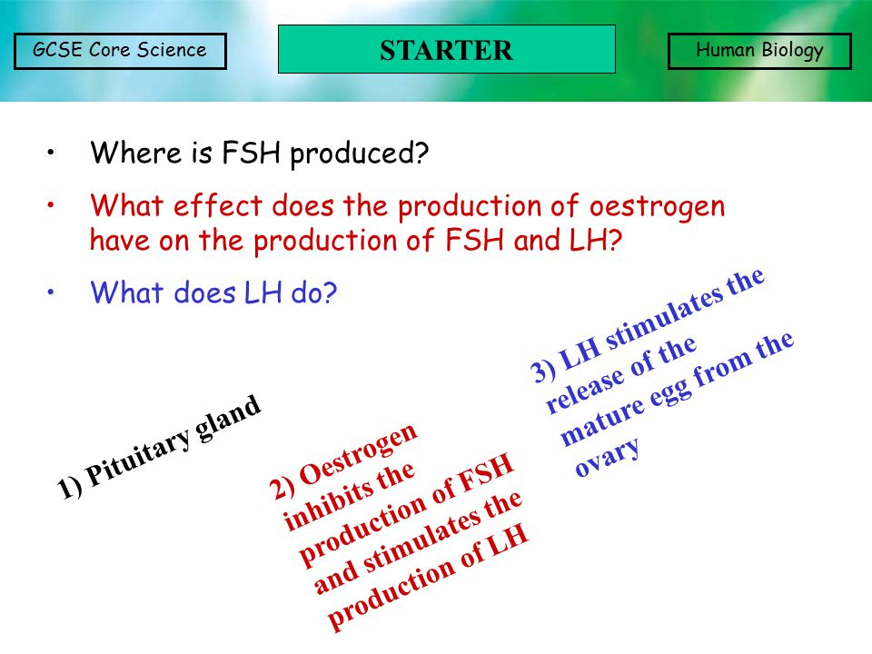 STARTER Where is FSH produced What effect does the production of oestrogen have on the production of FSH and LH