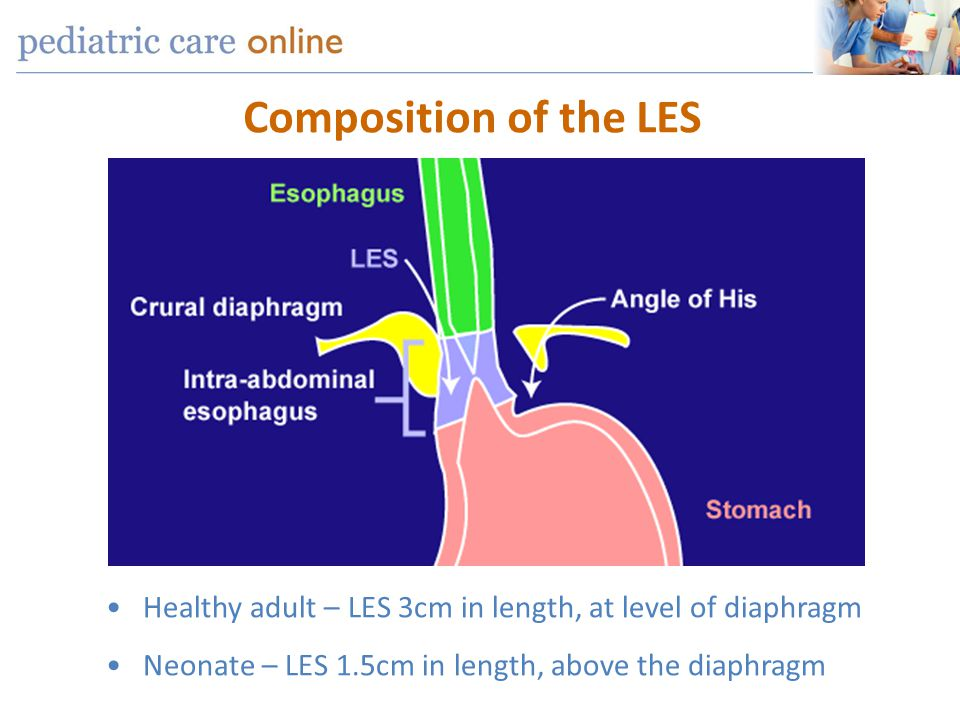 Composition of the LES