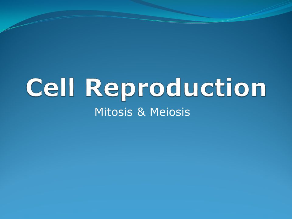 Cell Reproduction Mitosis & Meiosis