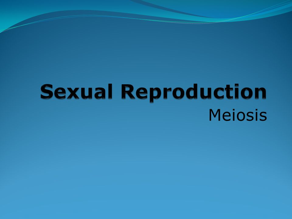 Sexual Reproduction Meiosis