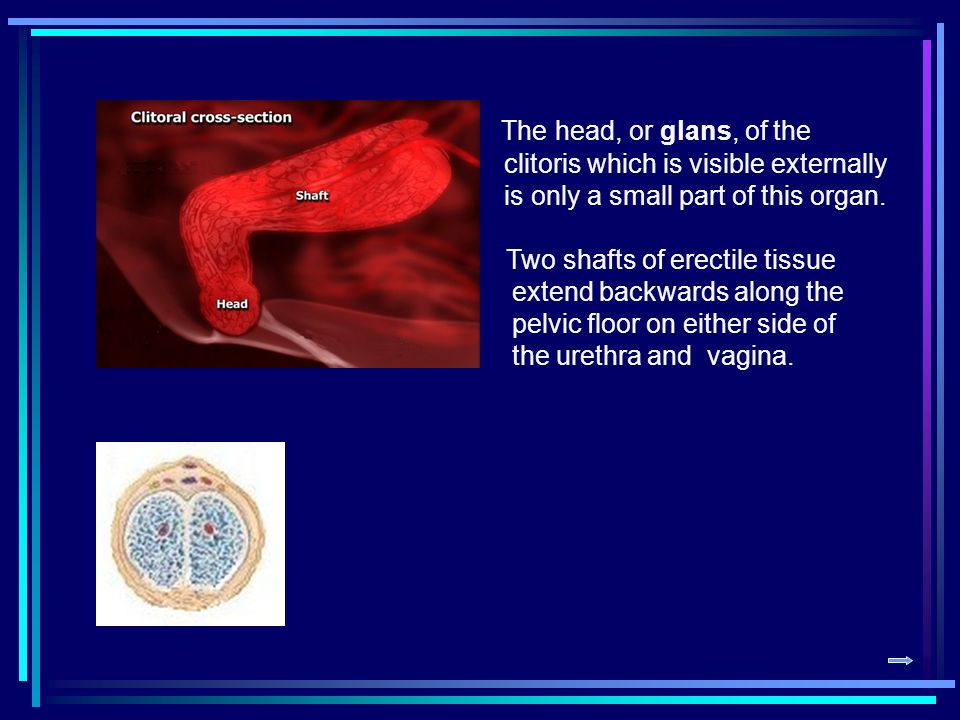 The head, or glans, of the clitoris which is visible externally