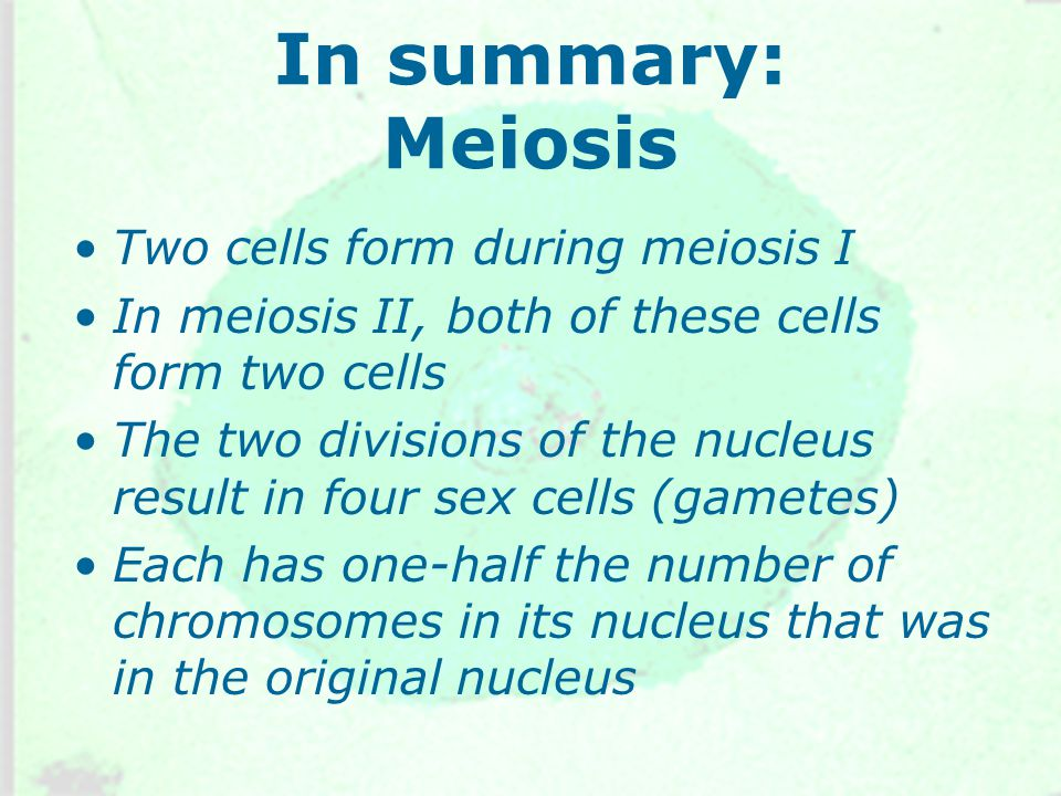 In summary: Meiosis Two cells form during meiosis I