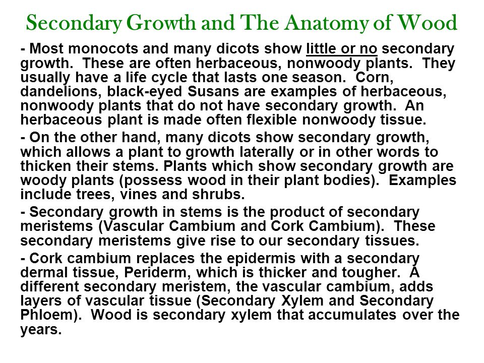 Secondary Growth and The Anatomy of Wood