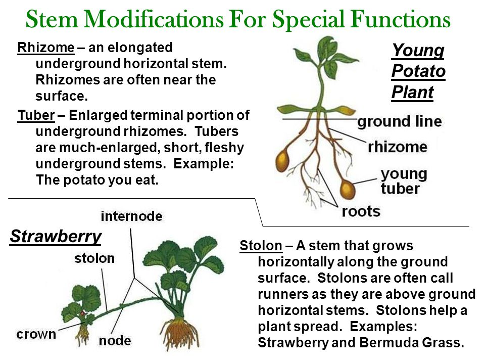 Stem Modifications For Special Functions