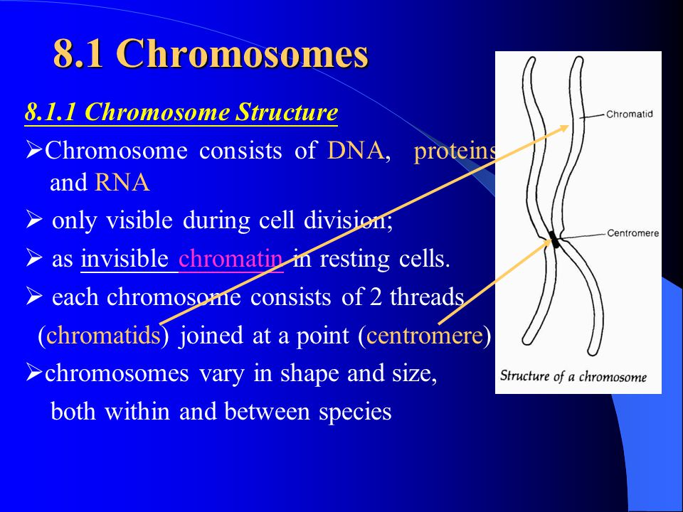 8.1 Chromosomes 8.1.1 Chromosome Structure