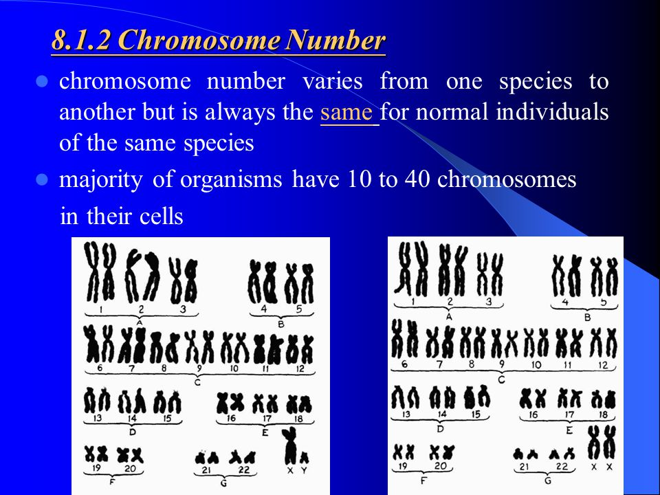 8.1.2 Chromosome Number chromosome number varies from one species to another but is always the same for normal individuals of the same species.
