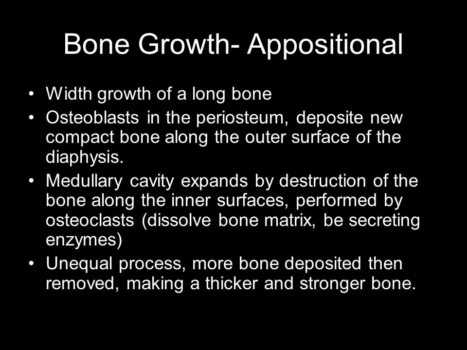 Bone Growth- Appositional
