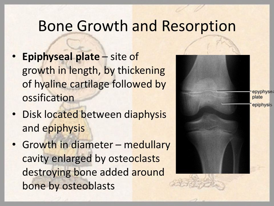 Bone Growth and Resorption